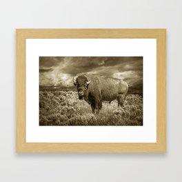 American Buffalo in Sepia Tone Framed Art Print