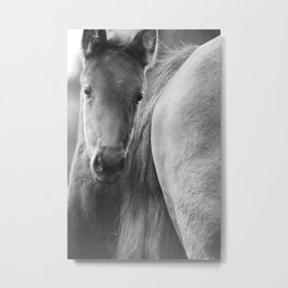 Original horses photo. Black & White, fine art, animal photography, landscape, b&w Metal Print