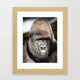 Silver Back Gorilla Framed Art Print