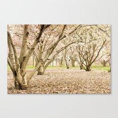 Blossom of Spring Canvas Print
