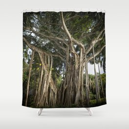 Banyan Tree at Bonnet House Shower Curtain