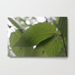 Leaf Teas Metal Print
