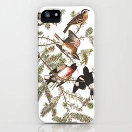 Rose breasted grosbeak, Birds of America, Audubon Plate 127 iPhone Case