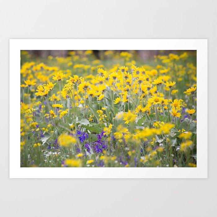 Meadow Gold - Wildflowers in a Mountain Meadow Kunstdrucke