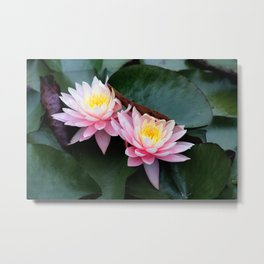 Ombre Water Lily Duo Metal Print