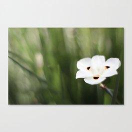 An Flower Canvas Print