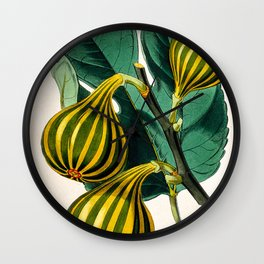Fig plant, vintage illustration Wall Clock