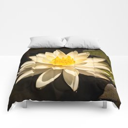 Lily of the Pond Comforters