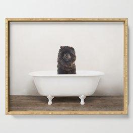 Chow Chow Dog in Vintage Bathtub Serving Tray