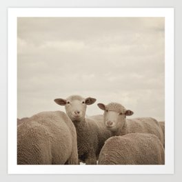 Smiling Sheep  Art Print