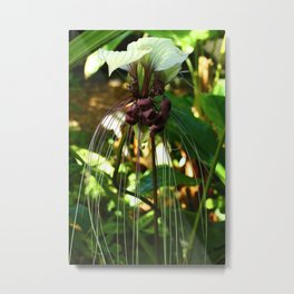 White Bat Flower Metal Print