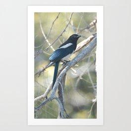 Magpie Art Print