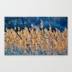 My blue reed dream - photography Canvas Print
