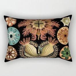 Sea Life Illustrations by Ernst Haeckel, 1904 Rectangular Pillow