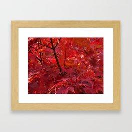 Red Japanese Maple in Fall Framed Art Print