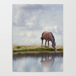 Brown horse drinking water in a lake Poster