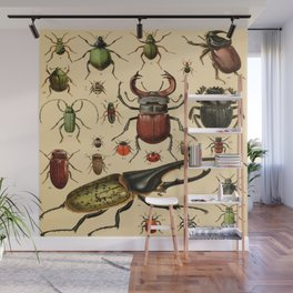Popular History of Animals Beetles Vintage Scientific Illustration Educational Diagrams Wall Mural