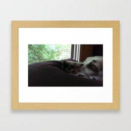Dalmatian Contemplation Framed Art Print