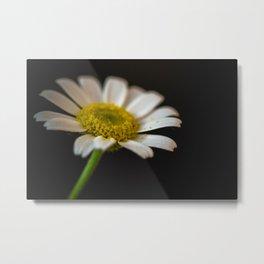 daisy in the dark Metal Print