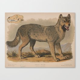 Vintage Illustration of a Gray Wolf (1874) Canvas Print