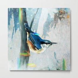 Nuthatch Bird Metal Print