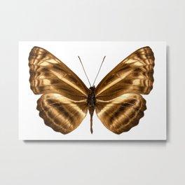"Butterfly species Neptis omeroda omeroda ""sailer butterfly"" Metal Print"
