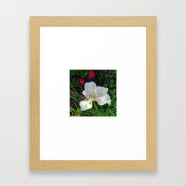 White Iris II Framed Art Print