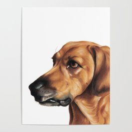 Dog Artwork in coloured pencil Poster