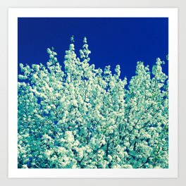 White Flowering Tree Art Print