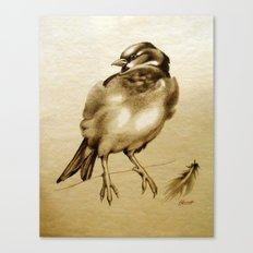 Sparrow With Feather Canvas Print
