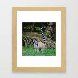 Madagascar's Exotic Ringtail Lemur Framed Art Print