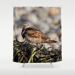 Ruddy Turnstone on Seaweed Mountain at the Beach Shower Curtain