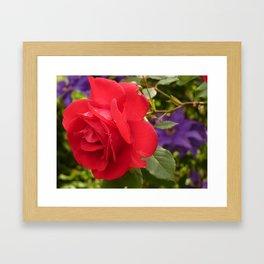 A Single Red Rose Framed Art Print