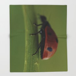 Ladybird on a Flower, macro photography, home, still life, fine art, animal love, nature photo Throw Blanket