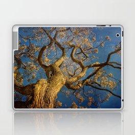 Curls . Fall tree in Boston Garden, MA Laptop & iPad Skin