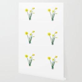 Yellow Daffodils Botanical Illustration Wallpaper