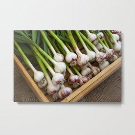 Organic Red Russian Garlic Builb Metal Print