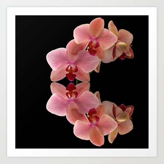 Orchid. Art Print