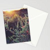 Sunlit Stationery Cards