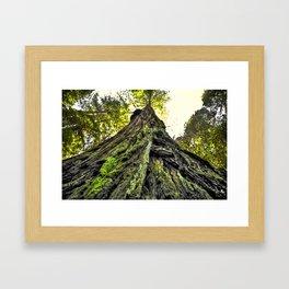 The Moss & The Tree Framed Art Print