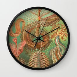 Ernst Haeckel Spined Marine Worms Illustration, 1904 Wall Clock