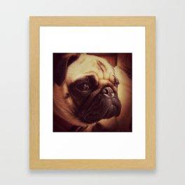 Chia Pug Framed Art Print