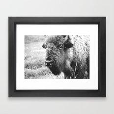 Buffalo Portrait Photograph - the Black and white series Framed Art Print