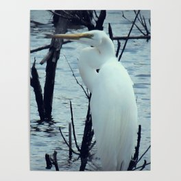 Great Egret White Bird Blue Water A107 Poster