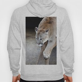 Cougar on a tree branch Hoody