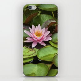 Pink Blossom on Lily Pads in a Michigan Pond iPhone Skin