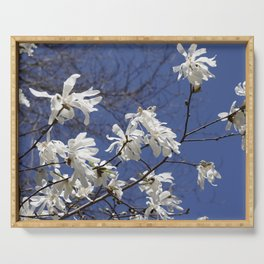 Star filled sky (Star Magnolia flowers!)      Edit Serving Tray