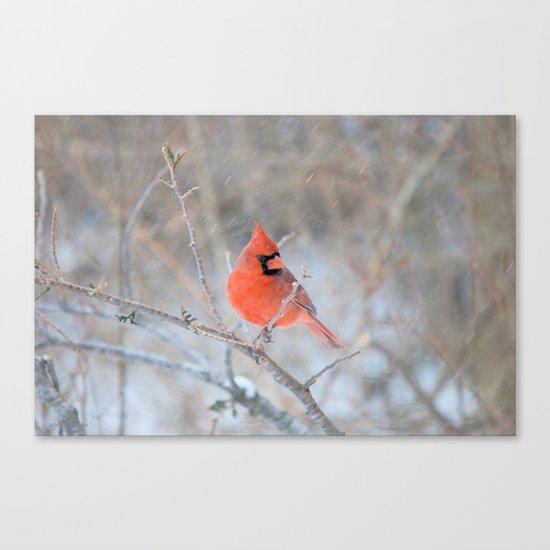 Hanging On (Northern Cardinal) Canvas Print