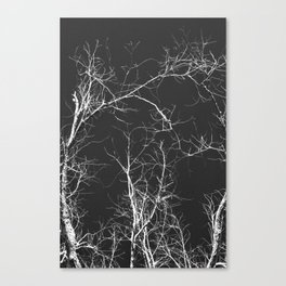 Branches and Sky Canvas Print