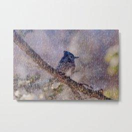Blue Blizzard (American Blue Jay) Metal Print